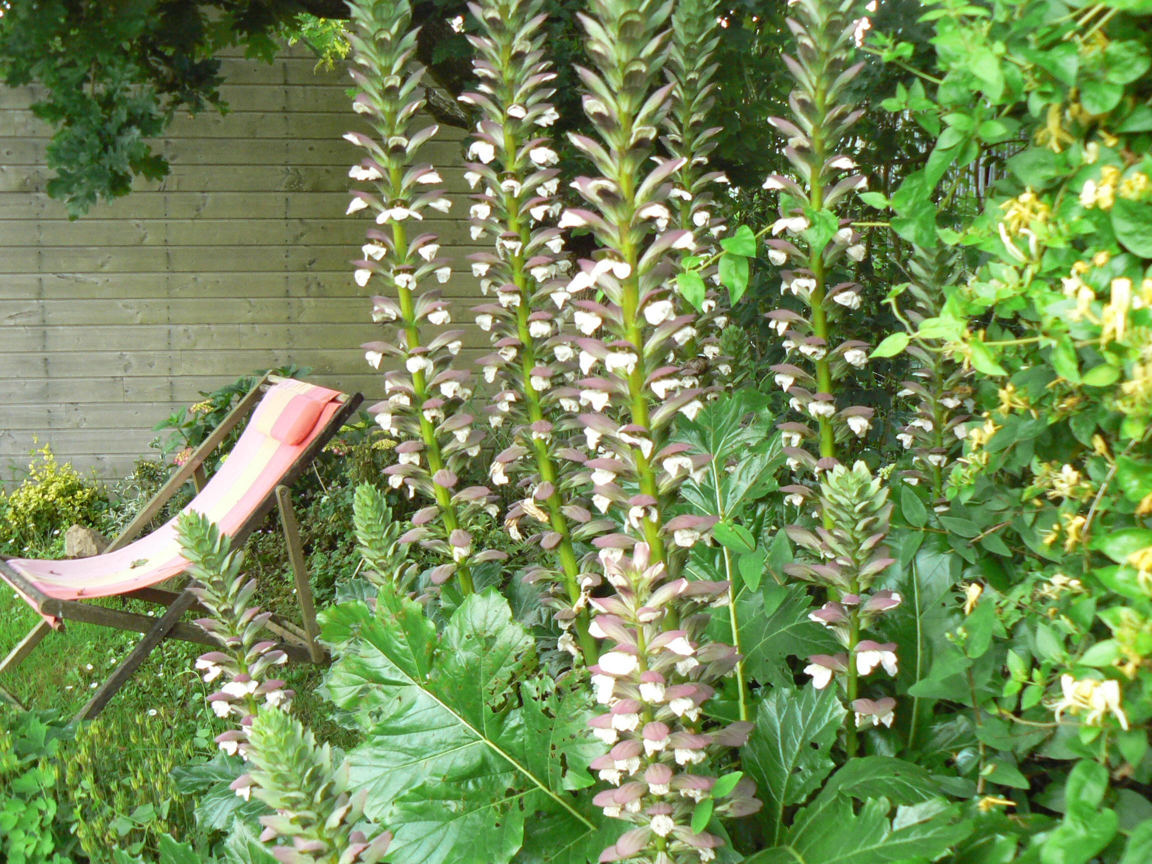Abri acanthe plan jardin 3d for Jardin 3d