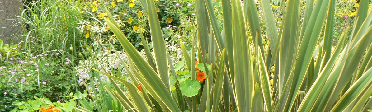 Phormium plan jardin 3d for Jardin 3d en ligne